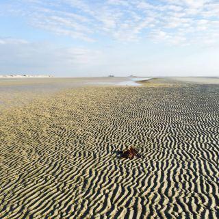 NordseeEstate_Sandwellen